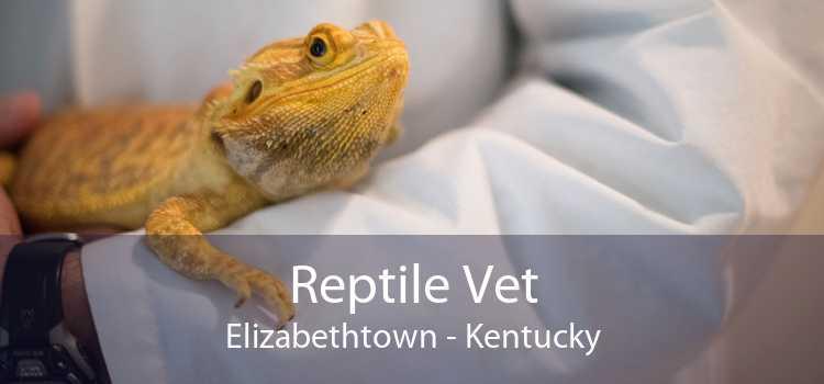 Reptile Vet Elizabethtown - Kentucky