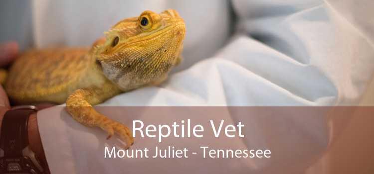 Reptile Vet Mount Juliet - Tennessee