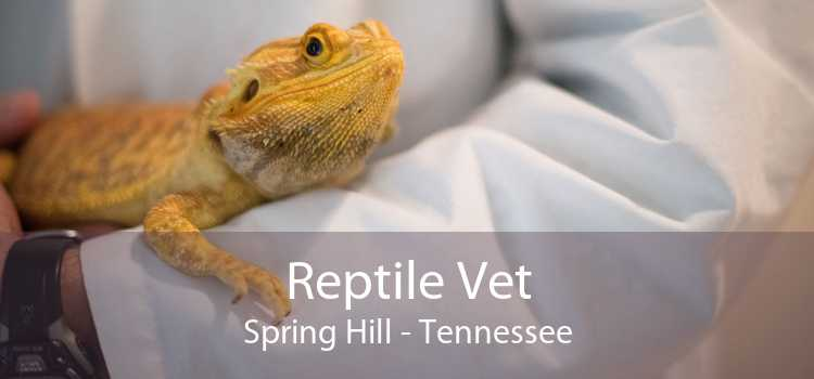 Reptile Vet Spring Hill - Tennessee