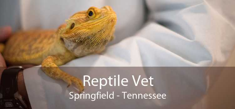 Reptile Vet Springfield - Tennessee