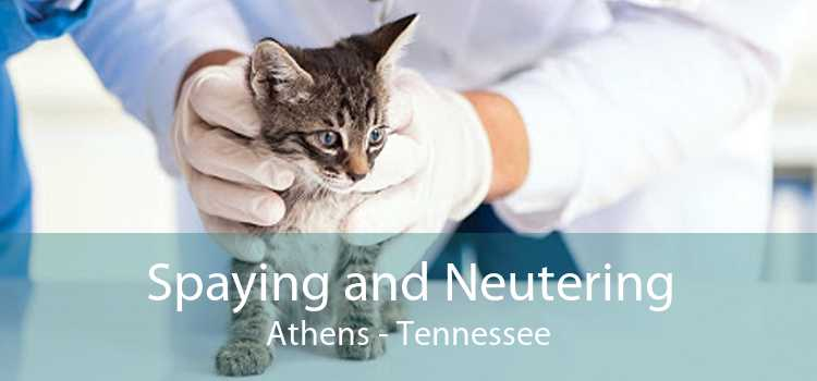 Spaying and Neutering Athens - Tennessee