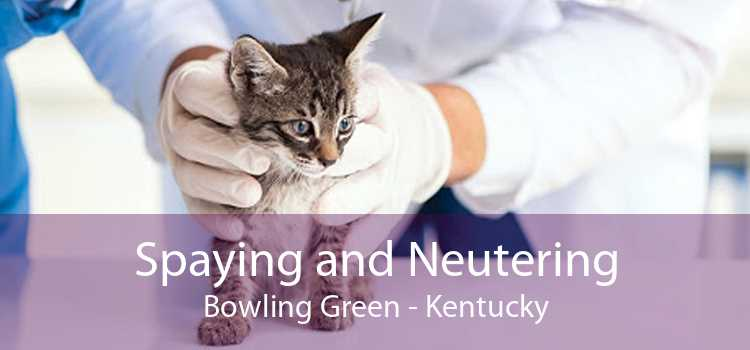 Spaying and Neutering Bowling Green - Kentucky