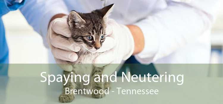 Spaying and Neutering Brentwood - Tennessee