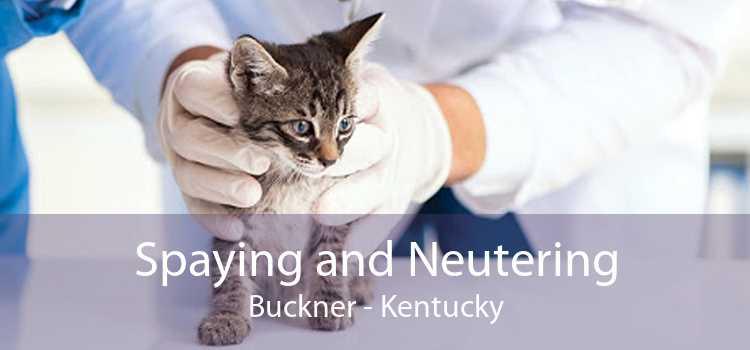 Spaying and Neutering Buckner - Kentucky