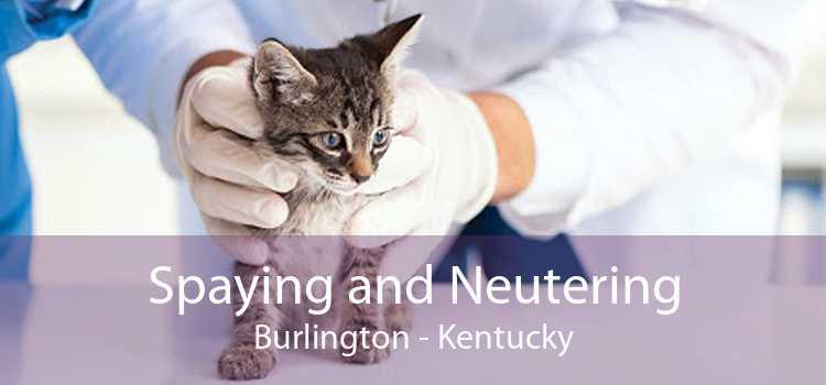 Spaying and Neutering Burlington - Kentucky