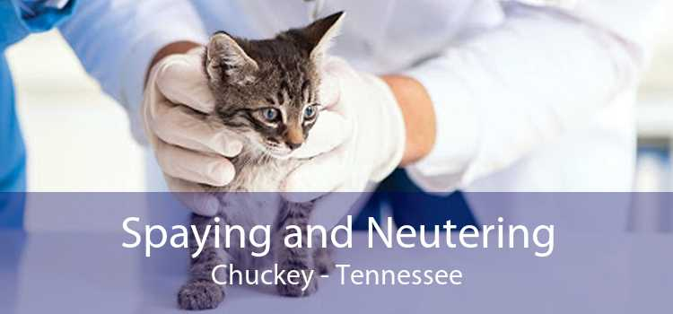 Spaying and Neutering Chuckey - Tennessee