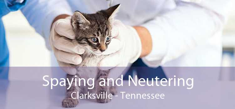 Spaying and Neutering Clarksville - Tennessee