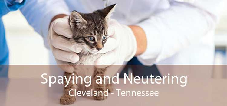 Spaying and Neutering Cleveland - Tennessee
