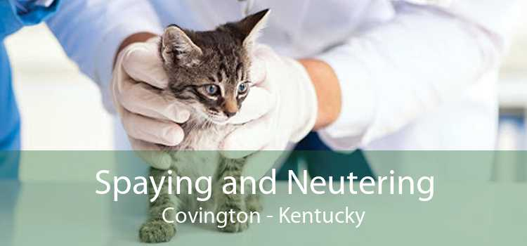 Spaying and Neutering Covington - Kentucky