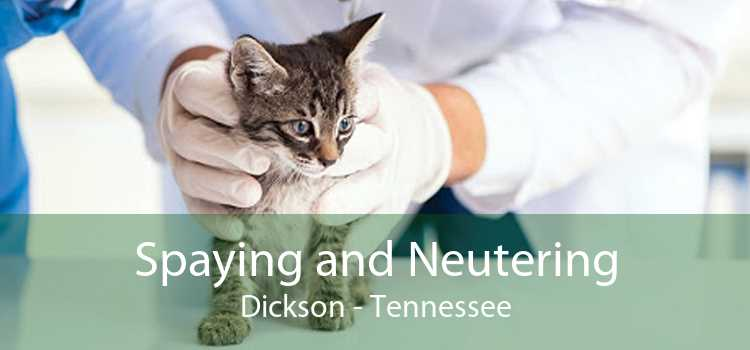 Spaying and Neutering Dickson - Tennessee
