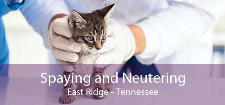 Spaying and Neutering East Ridge - Tennessee