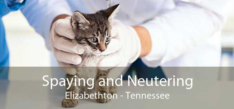 Spaying and Neutering Elizabethton - Tennessee
