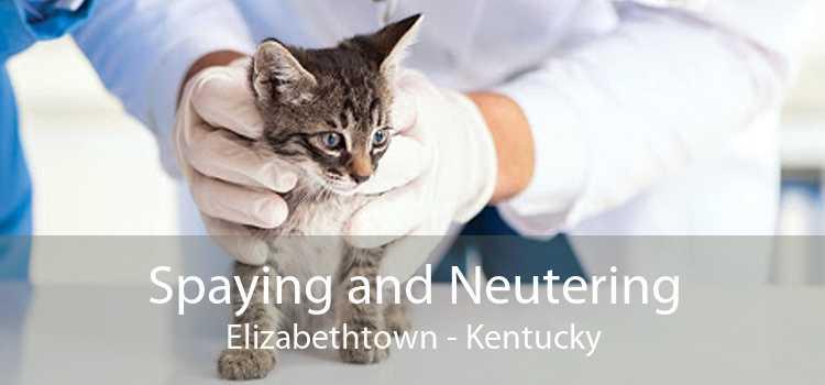 Spaying and Neutering Elizabethtown - Kentucky