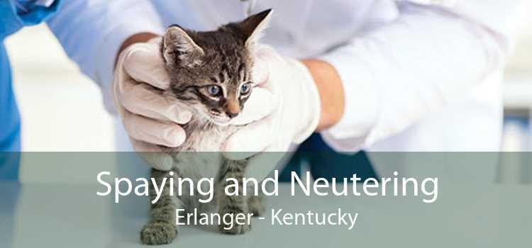 Spaying and Neutering Erlanger - Kentucky