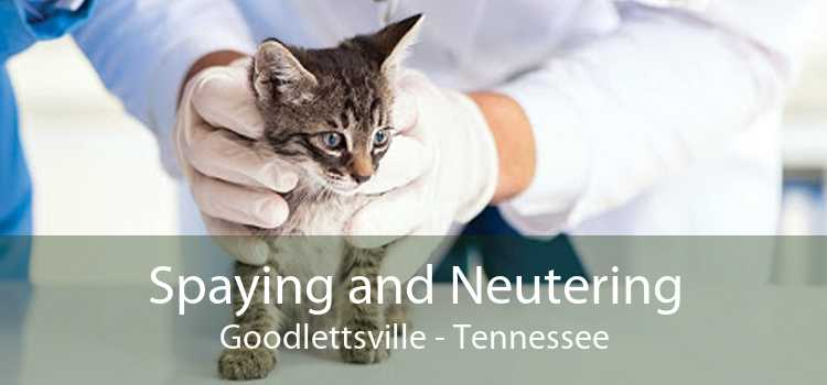 Spaying and Neutering Goodlettsville - Tennessee