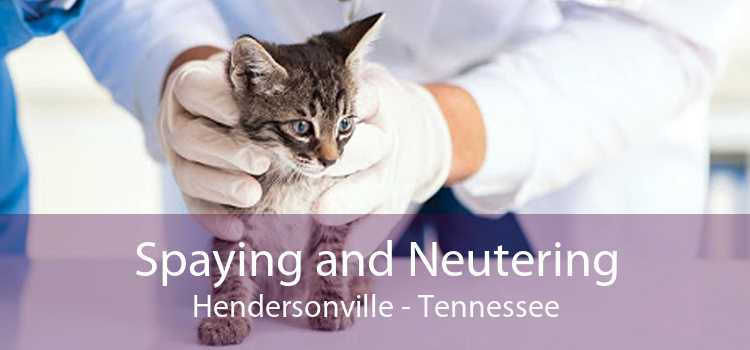 Spaying and Neutering Hendersonville - Tennessee