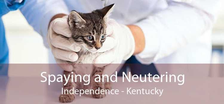 Spaying and Neutering Independence - Kentucky