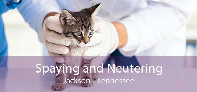 Spaying and Neutering Jackson - Tennessee