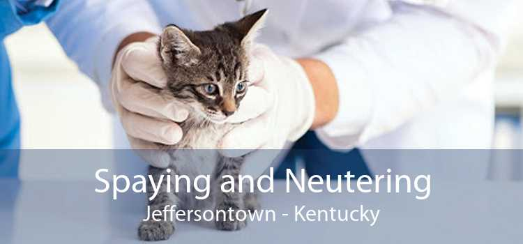 Spaying and Neutering Jeffersontown - Kentucky