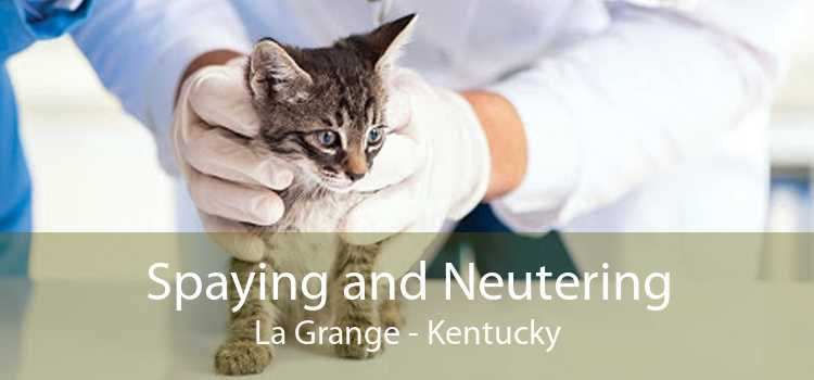 Spaying and Neutering La Grange - Kentucky