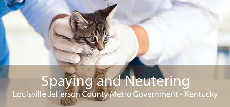 Spaying and Neutering Louisville Jefferson County Metro Government - Kentucky