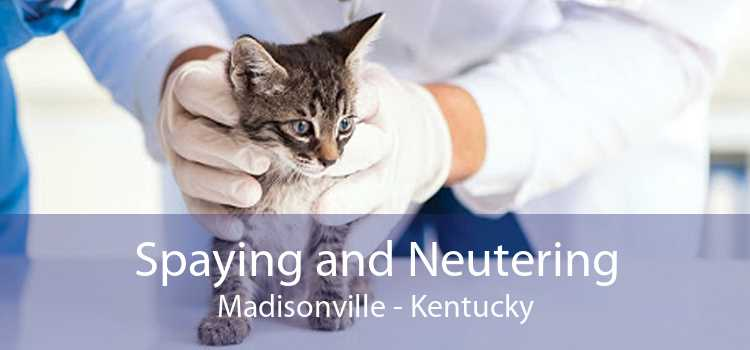 Spaying and Neutering Madisonville - Kentucky