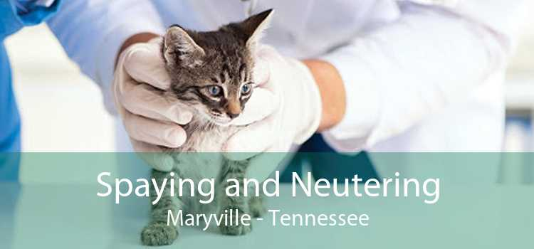 Spaying and Neutering Maryville - Tennessee