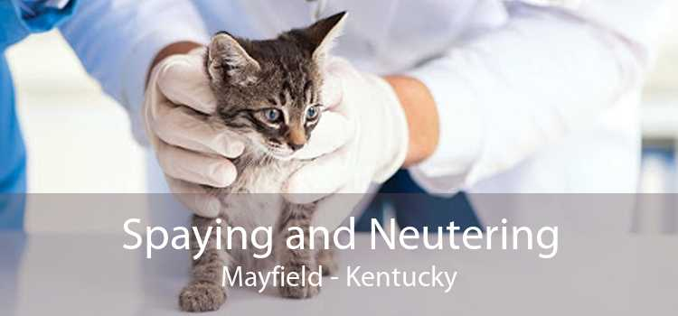 Spaying and Neutering Mayfield - Kentucky