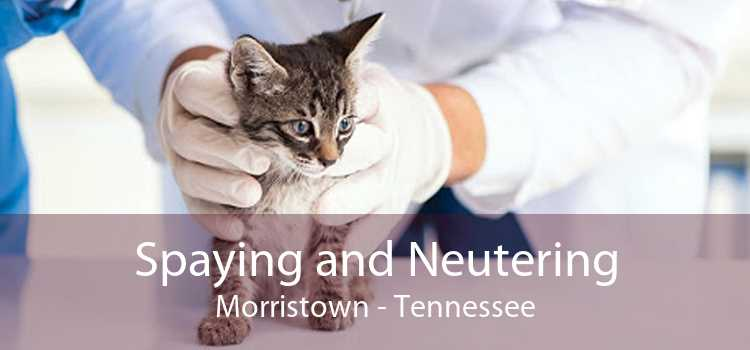 Spaying and Neutering Morristown - Tennessee