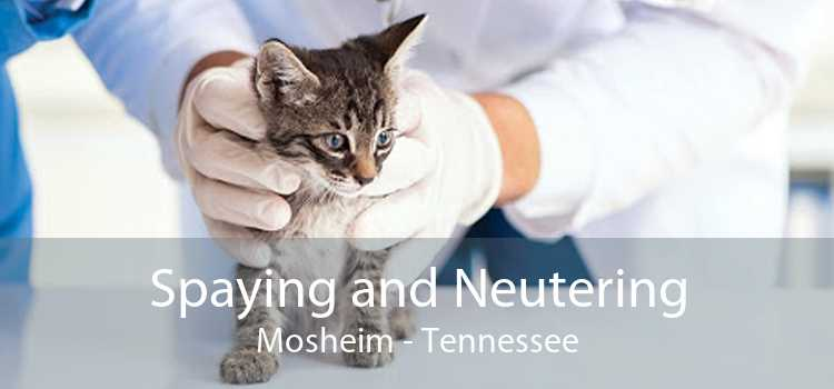 Spaying and Neutering Mosheim - Tennessee