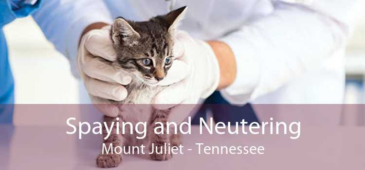 Spaying and Neutering Mount Juliet - Tennessee