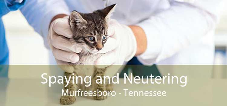 Spaying and Neutering Murfreesboro - Tennessee