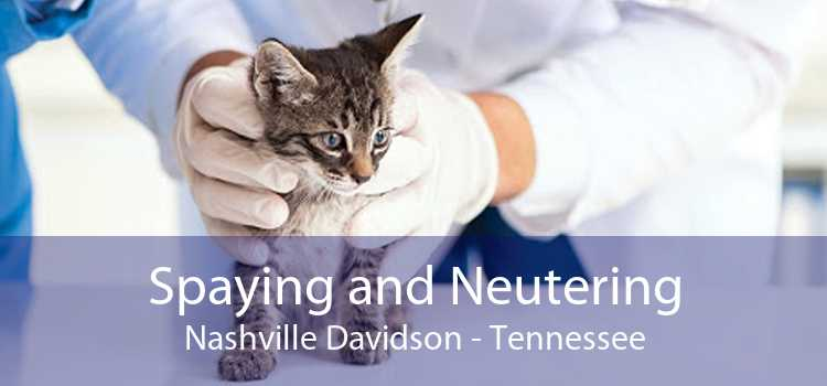 Spaying and Neutering Nashville Davidson - Tennessee