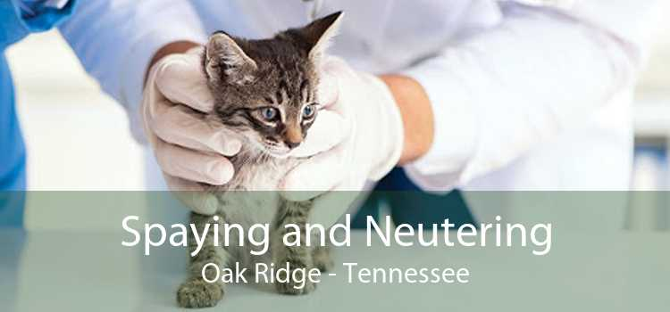 Spaying and Neutering Oak Ridge - Tennessee