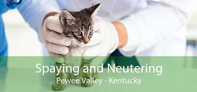 Spaying and Neutering Pewee Valley - Kentucky