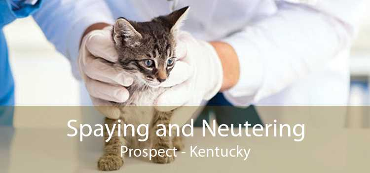 Spaying and Neutering Prospect - Kentucky