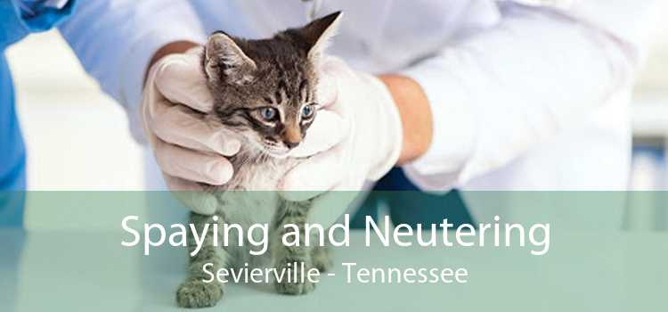 Spaying and Neutering Sevierville - Tennessee