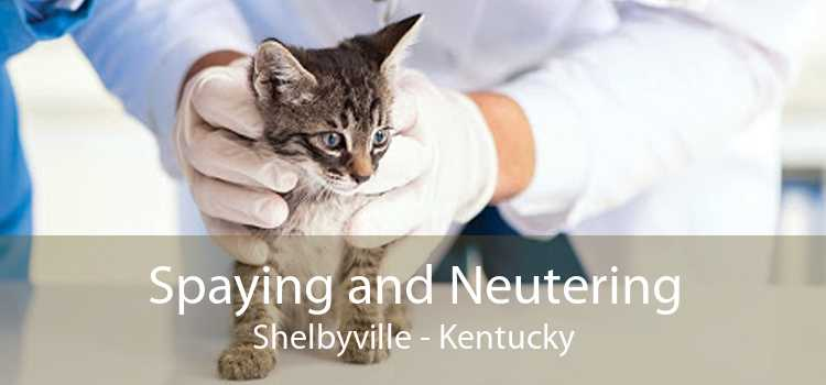 Spaying and Neutering Shelbyville - Kentucky