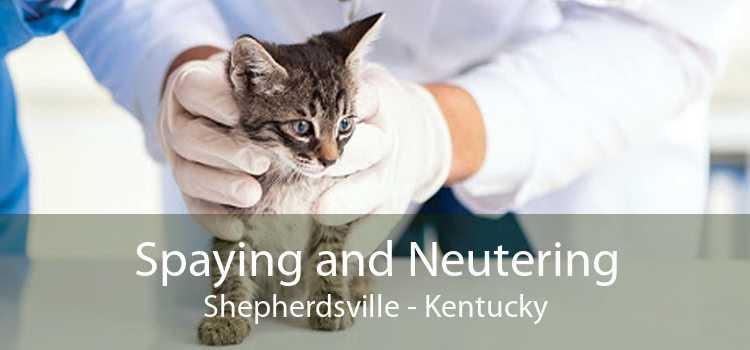Spaying and Neutering Shepherdsville - Kentucky