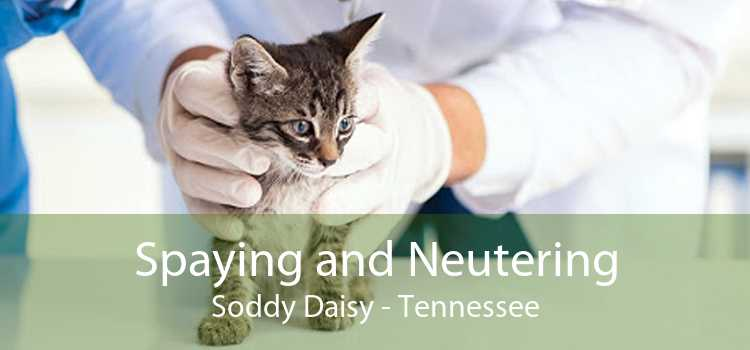 Spaying and Neutering Soddy Daisy - Tennessee