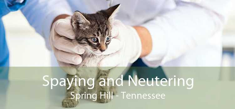 Spaying and Neutering Spring Hill - Tennessee