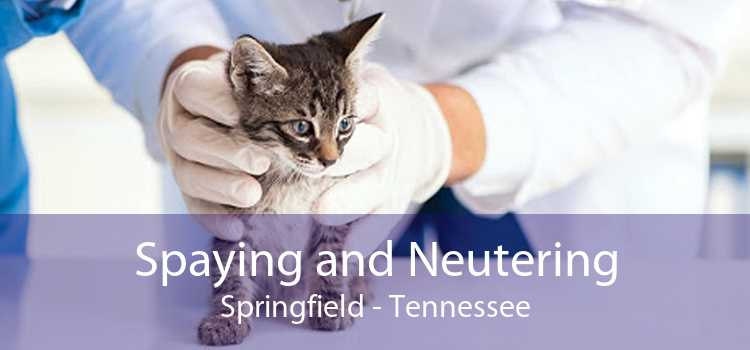 Spaying and Neutering Springfield - Tennessee