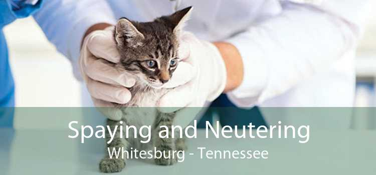 Spaying and Neutering Whitesburg - Tennessee