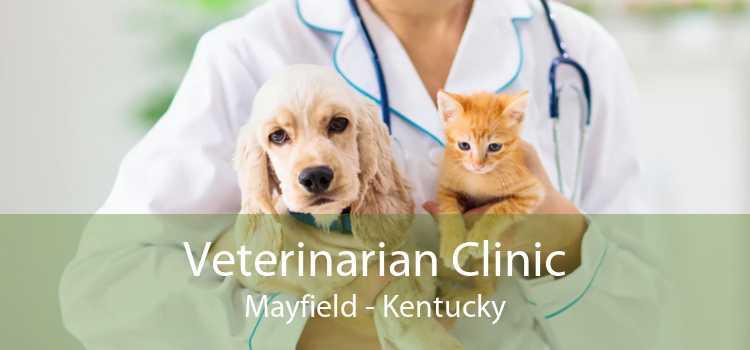 Veterinarian Clinic Mayfield - Kentucky